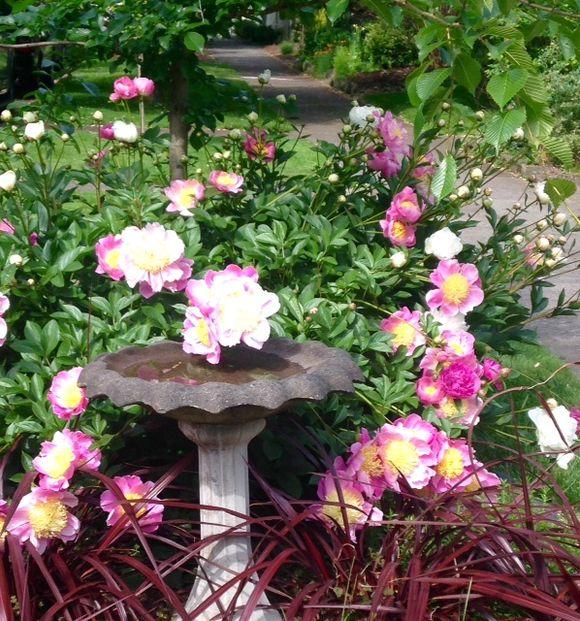 image from http://gardenrooms.typepad.com/.a/6a00e008cbe8b5883401b8d1144f21970c-pi