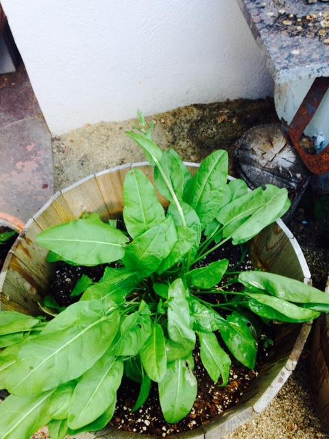 image from http://gardenrooms.typepad.com/.a/6a00e008cbe8b5883401b7c78ac74c970b-pi