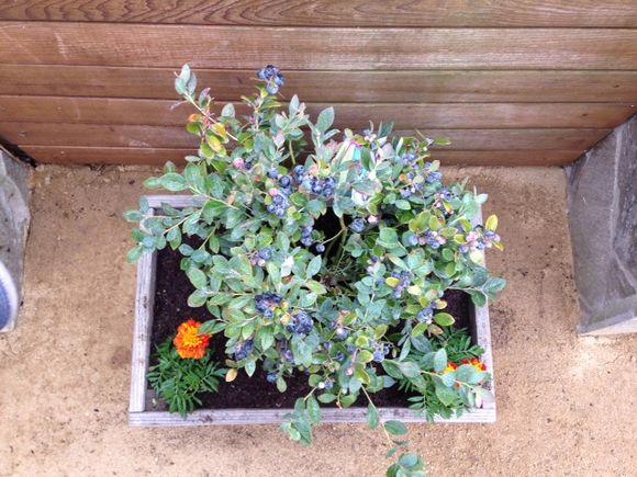 image from http://gardenrooms.typepad.com/.a/6a00e008cbe8b5883401b7c78f6bf7970b-pi