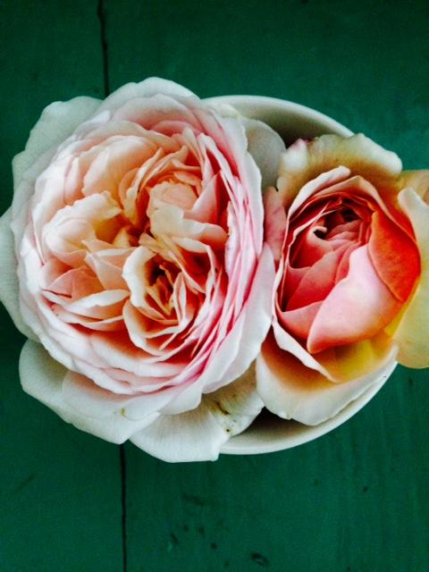 image from http://gardenrooms.typepad.com/.a/6a00e008cbe8b5883401bb0839a551970d-pi