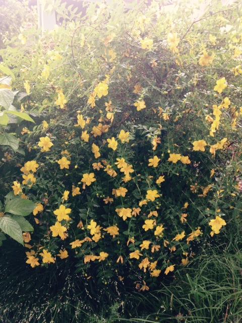 image from http://gardenrooms.typepad.com/.a/6a00e008cbe8b5883401b7c79ceeba970b-pi