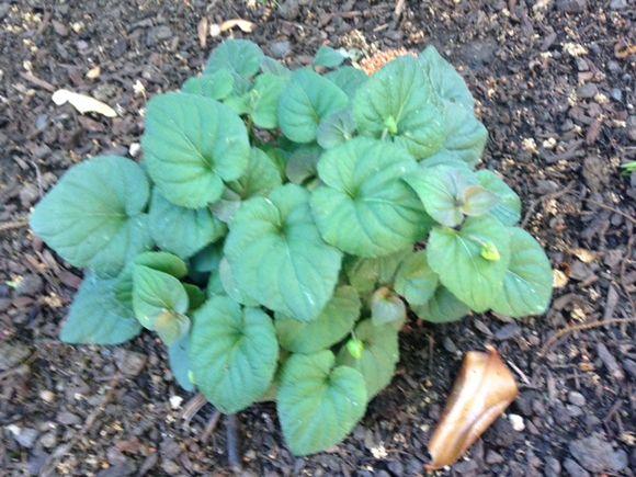 image from http://gardenrooms.typepad.com/.a/6a00e008cbe8b5883401bb08411d37970d-pi
