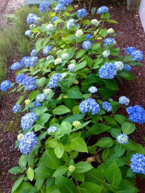 image from http://gardenrooms.typepad.com/.a/6a00e008cbe8b5883401b7c79ceed8970b-pi