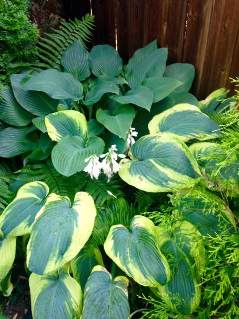 image from http://gardenrooms.typepad.com/.a/6a00e008cbe8b5883401b7c7a542e6970b-pi