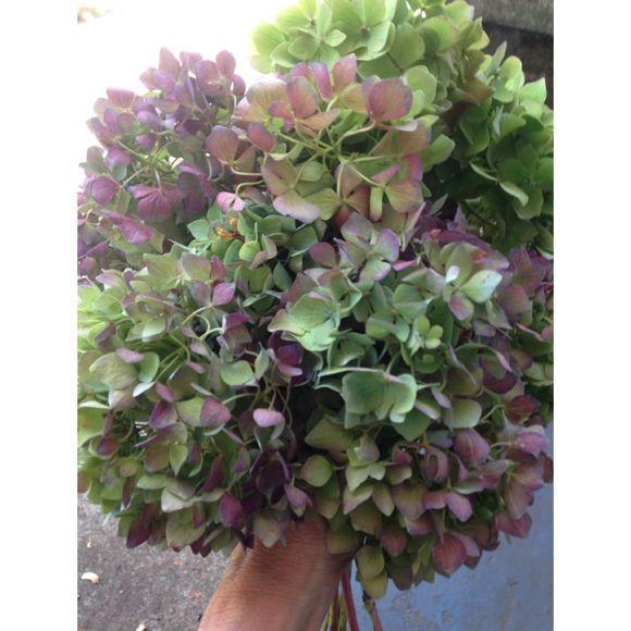 image from http://gardenrooms.typepad.com/.a/6a00e008cbe8b5883401bb08869bb3970d-pi