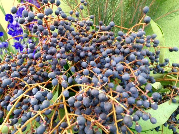 image from http://gardenrooms.typepad.com/.a/6a00e008cbe8b5883401b8d1820021970c-pi