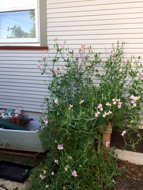 image from http://gardenrooms.typepad.com/.a/6a00e008cbe8b5883401b7c85ad6d2970b-pi