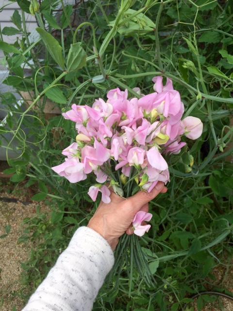 image from http://gardenrooms.typepad.com/.a/6a00e008cbe8b5883401b7c85ad6d7970b-pi