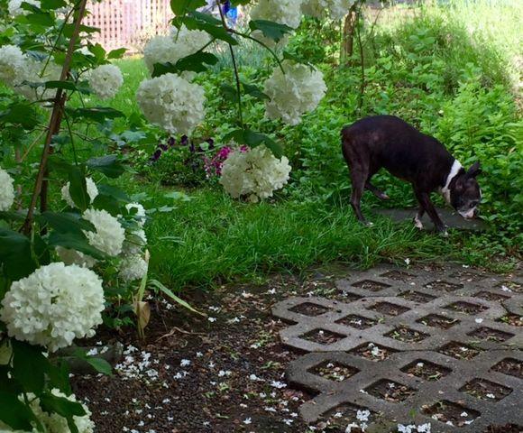 image from http://gardenrooms.typepad.com/.a/6a00e008cbe8b5883401b8d1f22f51970c-pi