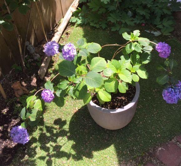 image from http://gardenrooms.typepad.com/.a/6a00e008cbe8b5883401b7c868526c970b-pi