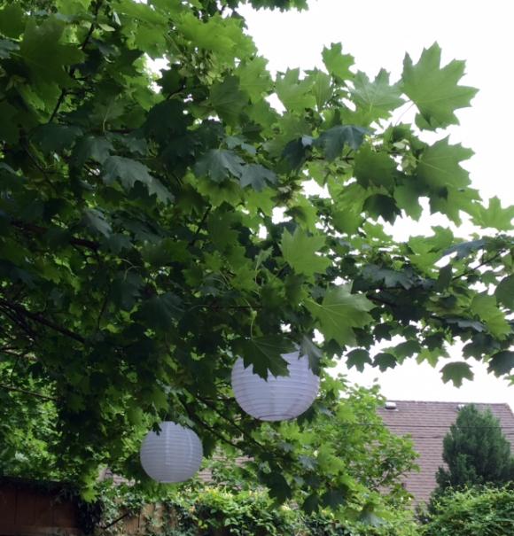 image from http://gardenrooms.typepad.com/.a/6a00e008cbe8b5883401b8d1ff8458970c-pi