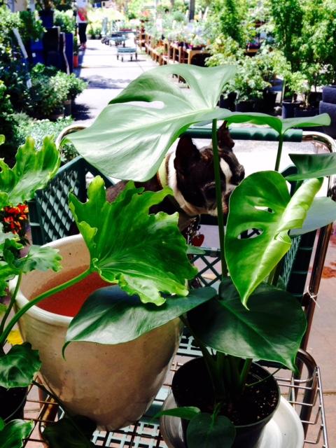 image from http://gardenrooms.typepad.com/.a/6a00e008cbe8b5883401bb09192697970d-pi