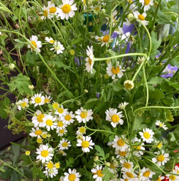 image from http://gardenrooms.typepad.com/.a/6a00e008cbe8b5883401b7c875b406970b-pi
