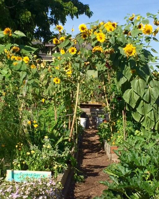 image from http://gardenrooms.typepad.com/.a/6a00e008cbe8b5883401b7c88ecf84970b-pi