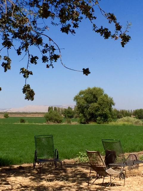 image from http://gardenrooms.typepad.com/.a/6a00e008cbe8b5883401b8d218867f970c-pi