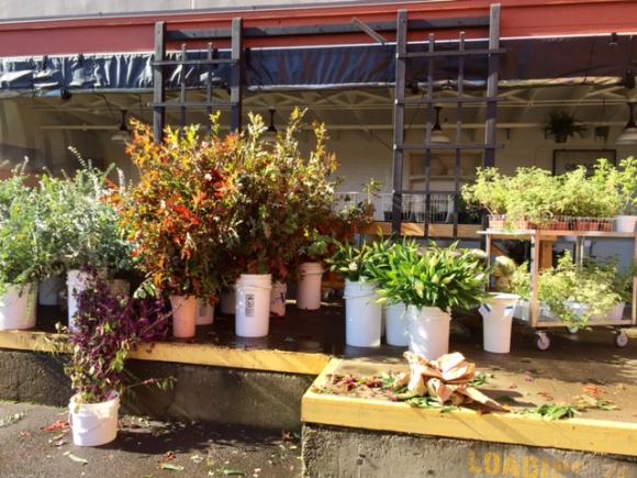 image from http://gardenrooms.typepad.com/.a/6a00e008cbe8b5883401bb094d4c85970d-pi