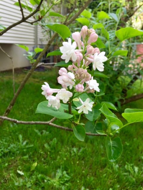 image from http://gardenrooms.typepad.com/.a/6a00e008cbe8b5883401b8d28008c1970c-pi