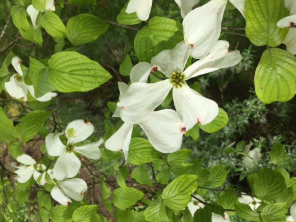 image from http://gardenrooms.typepad.com/.a/6a00e008cbe8b5883401bb0998d40f970d-pi