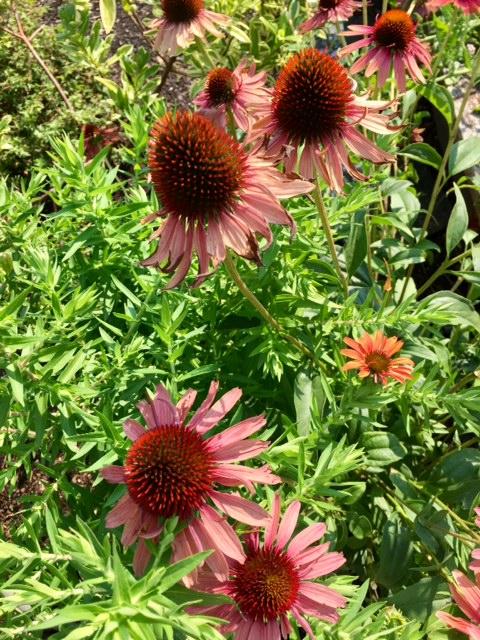 image from http://gardenrooms.typepad.com/.a/6a00e008cbe8b5883401b8d29faa59970c-pi