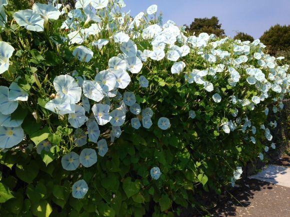 image from http://gardenrooms.typepad.com/.a/6a00e008cbe8b5883401a73e16f5b9970d-pi
