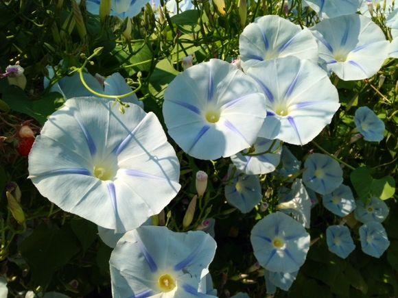 image from http://gardenrooms.typepad.com/.a/6a00e008cbe8b5883401b7c6e0ff76970b-pi
