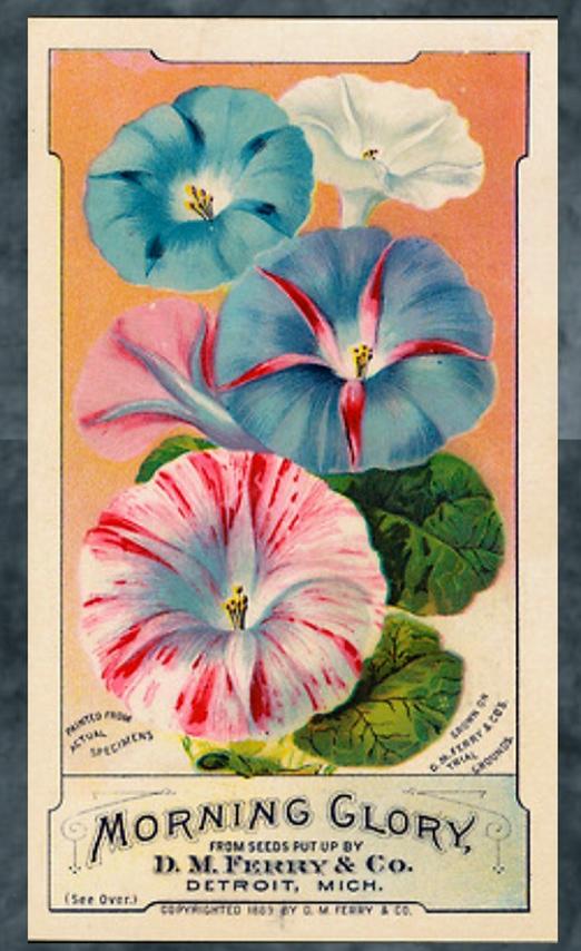 image from http://gardenrooms.typepad.com/.a/6a00e008cbe8b5883401b7c6e0ff7b970b-pi