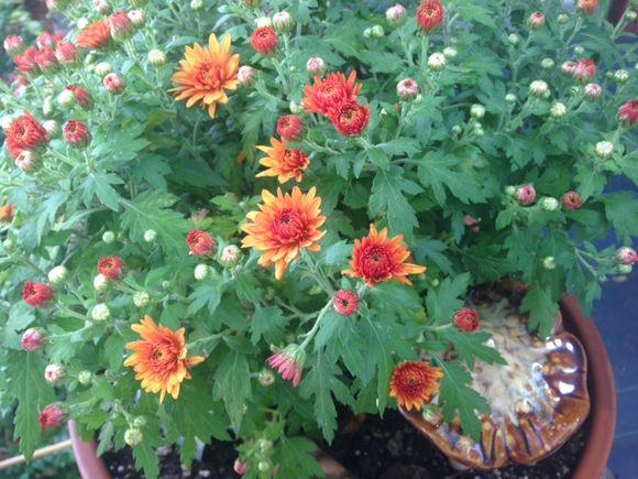 image from http://gardenrooms.typepad.com/.a/6a00e008cbe8b5883401b7c6e89855970b-pi
