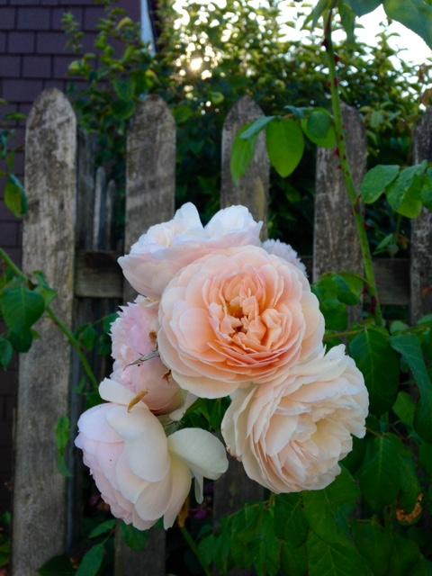 image from http://gardenrooms.typepad.com/.a/6a00e008cbe8b5883401bb079530e4970d-pi