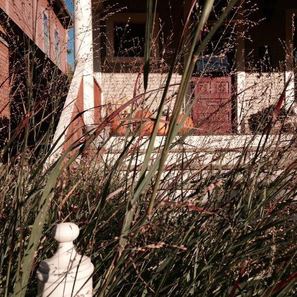 image from http://gardenrooms.typepad.com/.a/6a00e008cbe8b5883401b7c6f0049f970b-pi