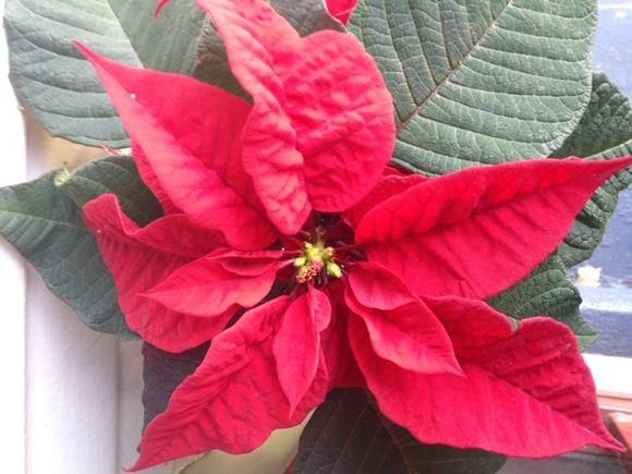 image from http://gardenrooms.typepad.com/.a/6a00e008cbe8b5883401b7c71d8b5a970b-pi