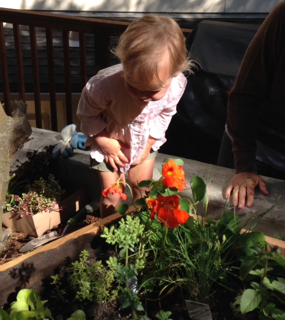 image from http://gardenrooms.typepad.com/.a/6a00e008cbe8b5883401b7c734b5c3970b-pi