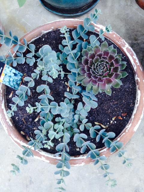 image from http://gardenrooms.typepad.com/.a/6a00e008cbe8b5883401b8d0be1e03970c-pi