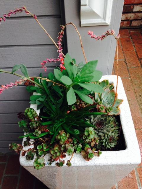 image from http://gardenrooms.typepad.com/.a/6a00e008cbe8b5883401b8d0be1e19970c-pi