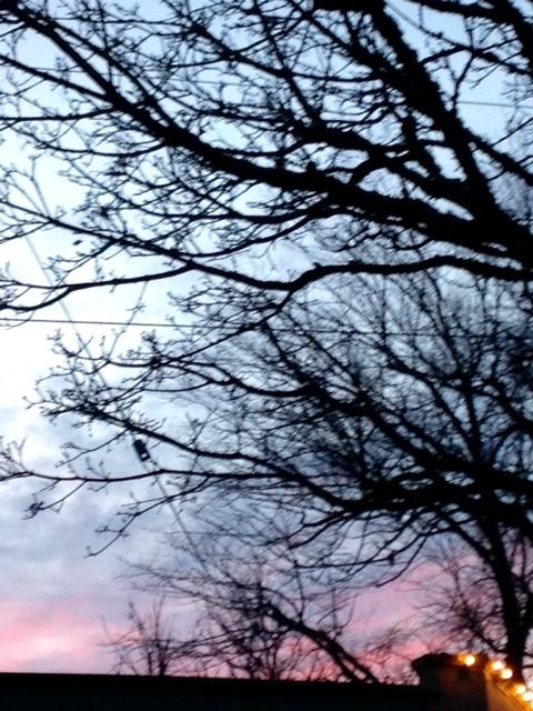 image from http://gardenrooms.typepad.com/.a/6a00e008cbe8b5883401b8d0c91cdd970c-pi