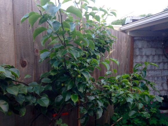 image from http://gardenrooms.typepad.com/.a/6a00e008cbe8b5883401bb0835528e970d-pi
