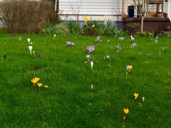 image from http://gardenrooms.typepad.com/.a/6a00e008cbe8b5883401bb08bd3ca5970d-pi