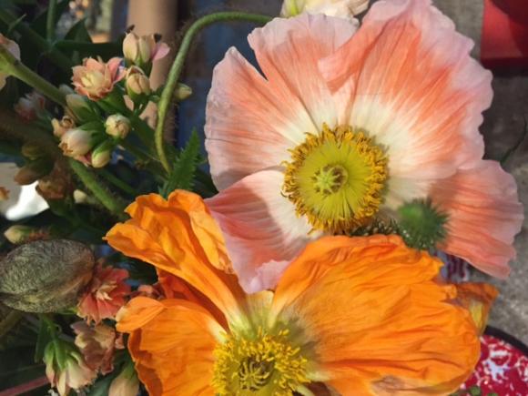 image from http://gardenrooms.typepad.com/.a/6a00e008cbe8b5883401b7c8d5f48d970b-pi