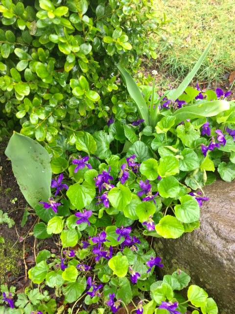image from http://gardenrooms.typepad.com/.a/6a00e008cbe8b5883401b8d26c3246970c-pi