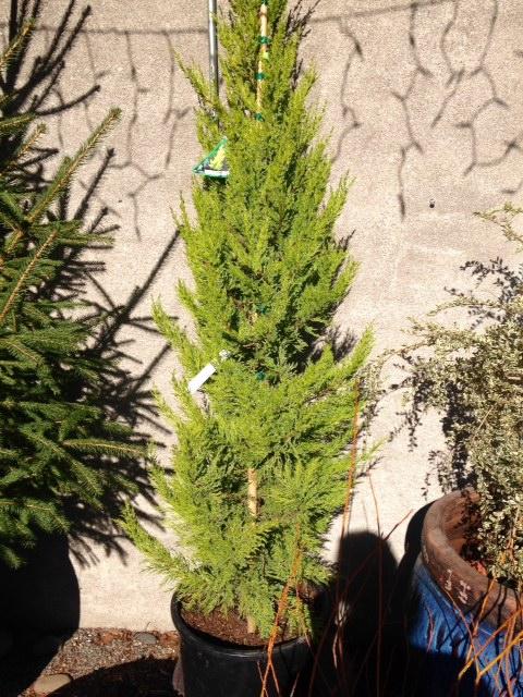 image from http://gardenrooms.typepad.com/.a/6a00e008cbe8b5883401b8d0de2d36970c-pi