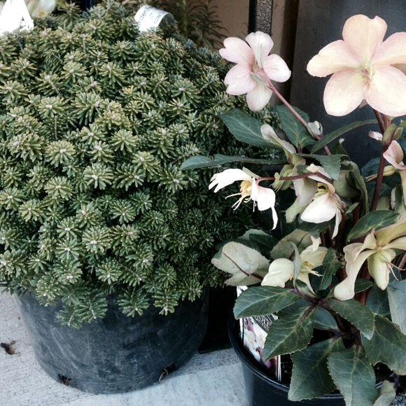 image from http://gardenrooms.typepad.com/.a/6a00e008cbe8b5883401b7c754e192970b-pi