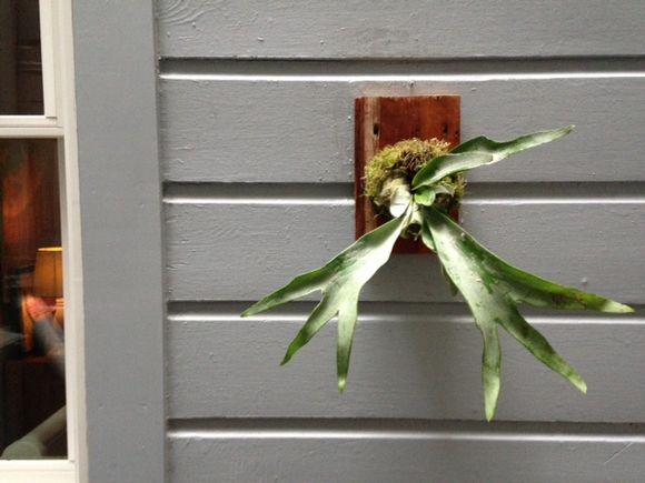 image from http://gardenrooms.typepad.com/.a/6a00e008cbe8b5883401bb07fdd05c970d-pi