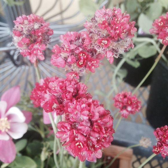 image from http://gardenrooms.typepad.com/.a/6a00e008cbe8b5883401b7c772d62d970b-pi