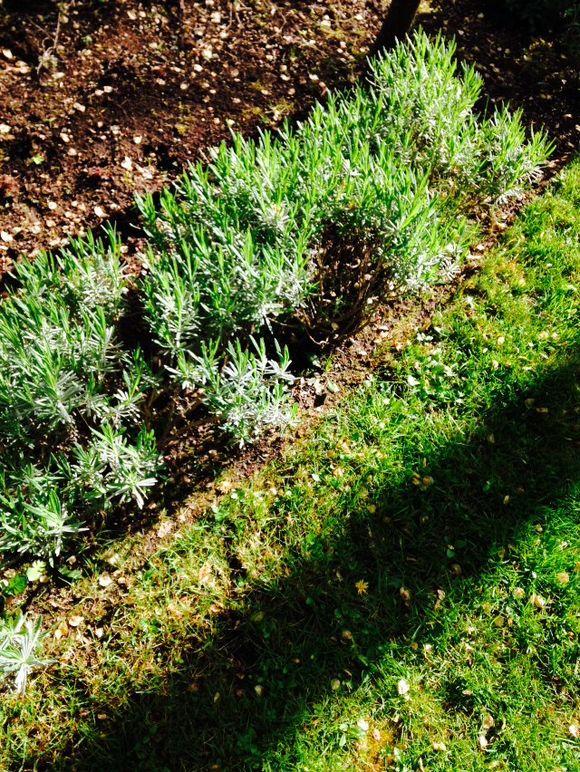 image from http://gardenrooms.typepad.com/.a/6a00e008cbe8b5883401bb081bddba970d-pi