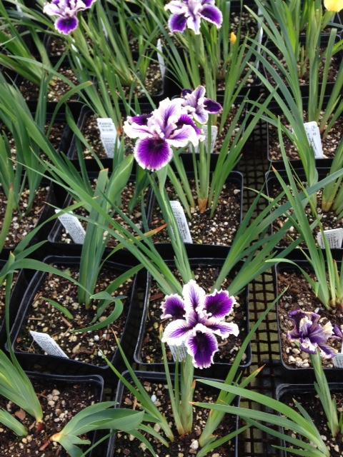 image from http://gardenrooms.typepad.com/.a/6a00e008cbe8b5883401bb081bddbf970d-pi