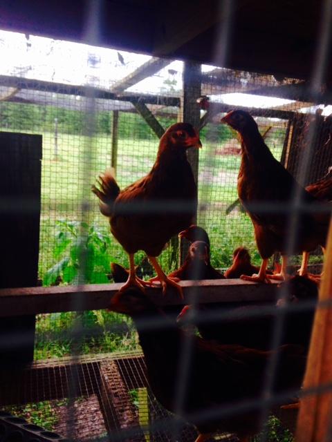 image from http://gardenrooms.typepad.com/.a/6a00e008cbe8b5883401b7c77c7e34970b-pi
