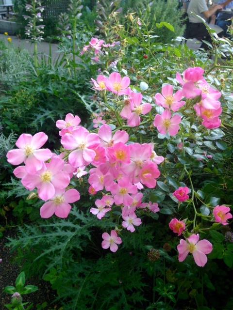 image from http://gardenrooms.typepad.com/.a/6a00e008cbe8b5883401b8d1291dfc970c-pi