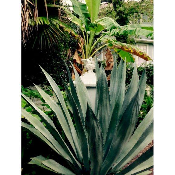 image from http://gardenrooms.typepad.com/.a/6a00e008cbe8b5883401b7c7e8ecbf970b-pi