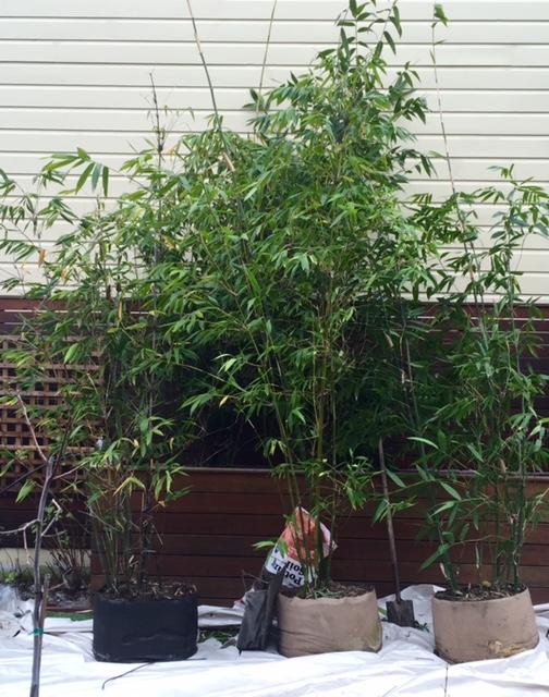 image from http://gardenrooms.typepad.com/.a/6a00e008cbe8b5883401b7c812eec1970b-pi