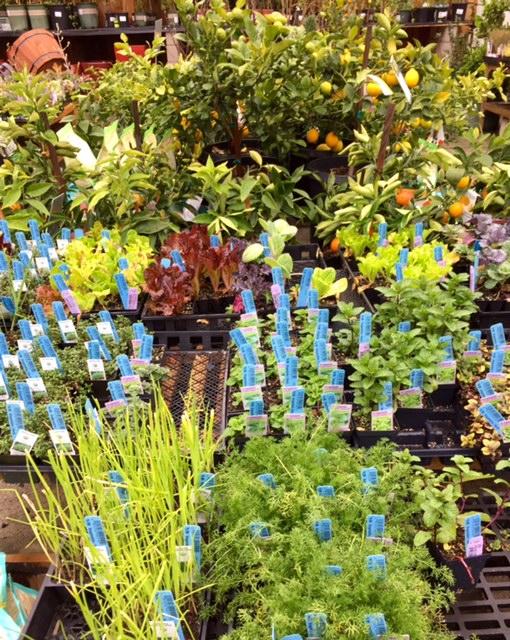 image from http://gardenrooms.typepad.com/.a/6a00e008cbe8b5883401b8d19d0efd970c-pi