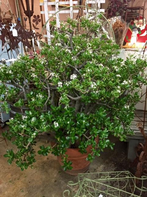 image from http://gardenrooms.typepad.com/.a/6a00e008cbe8b5883401bb09684624970d-pi